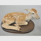 Chital Fawn Mount | Period: c1980 | Make: Terry Jacobs