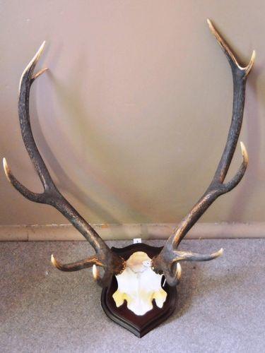 Mounted Deer Antlers Trophy | Period: c1960s | Material: Red Deer Antlers